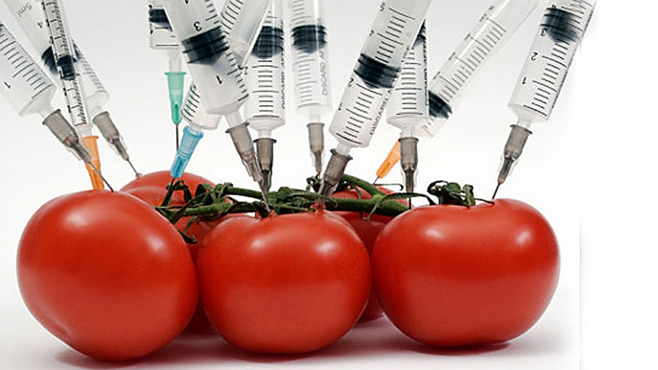 the harmful effects of gmos So, gmo can also enhance the required nutrient content in a crop - medicines and vaccines are costly to produce and sometimes require special storage conditions not readily available in third world countries researchers are working to develop edible vaccines in tomatoes and potatoes.